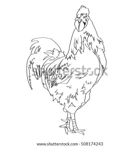 cock-outline-pics
