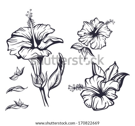 Outline Hand Drawn Hibiscus Exotic Hawaii Flower