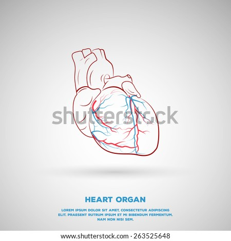 Outline Heart Organ illustration, includes artery and veins. - stock vector
