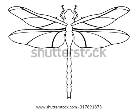 3,000+ Free Dragonfly & Insect Images - Pixabay