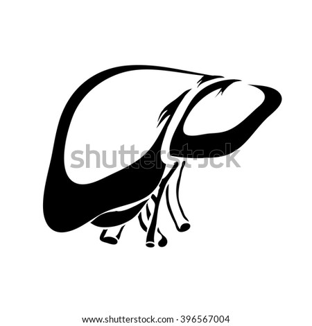 Outline liver human internal organs vector image