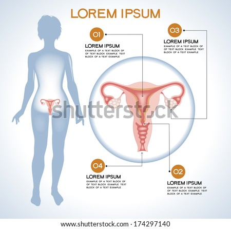Ovaries. Modern medical infographics. Internal organs in a human body. Anatomy of people - stock vector