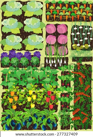 Overhead View On Vegetable Garden With Different Vegetables