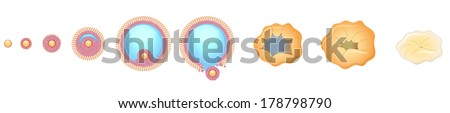 Ovulation process.  Release of a mature egg from the ovarian follicle. Isolated on a white background. - stock vector