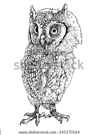 owl drawing realistic vector isolated on white background, stylized engraving - stock vector