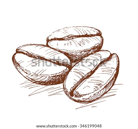 painted coffee beans, coffee beans, coffee, sketch of coffee beans, vector drawing - stock vector
