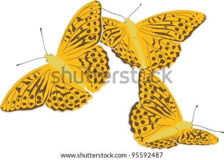Painted Silver-washed fritillary butterfly. Vector EPS 10