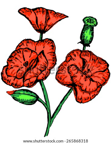painting of a bouquet of poppies on a white background