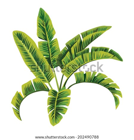 Painting tropic palm banana leaves, tree vector jungle floral background, wallpaper hand drawn vector Illustration - stock vector