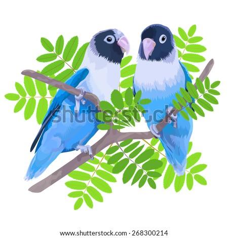 Violet Masked Lovebird