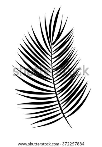 Palm Leaf Vector Background Illustration. EPS10  - stock vector