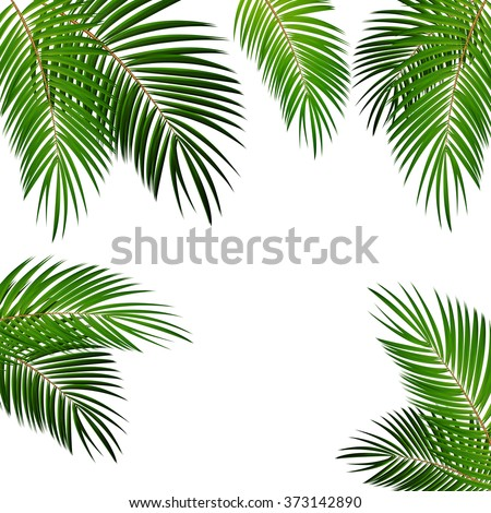 Palm Leaf Vector Background Illustration EPS10 - stock vector