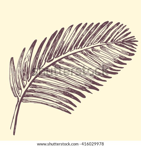 Palm leaves illustration. Tropical jungle plant. Vector eps10. Retro vintage style.