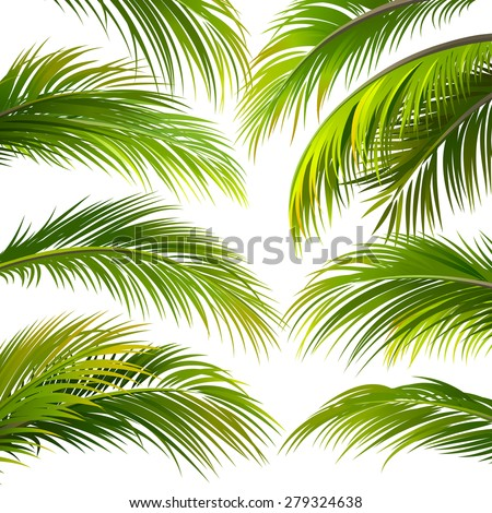 Palm leaves isolated on white. Vector illustration - stock vector