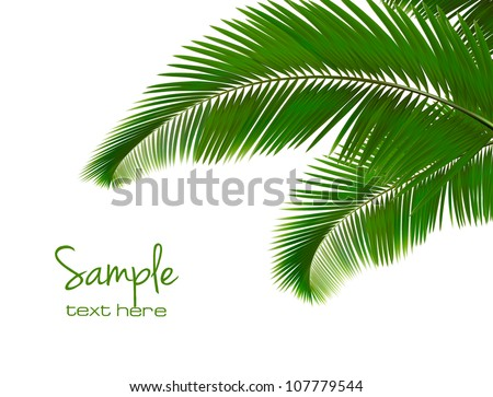 Palm leaves on white background. Vector. - stock vector