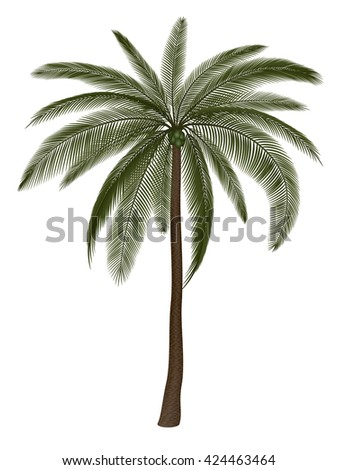 Palm tree isolated on white, vector illustration. EPS 10 contains transparency. - stock vector