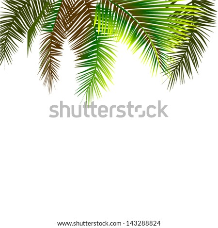 palm tree leaves hanging down from above - stock vector