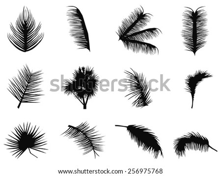 palm tree leaves silhouettes - stock vector