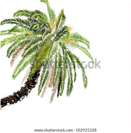 palm-tree on white background - stock vector