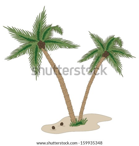 palm trees with coconut isolated on white background