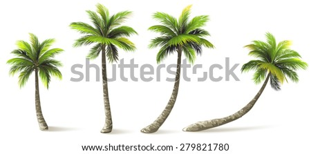Palm trees with shadow isolated on white. Vector illustration - stock vector