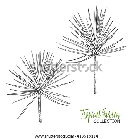 palm leaves coloring pages hand drawn branches and leaves