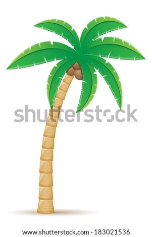 Palm Tropical Tree Vector Illustration Isolated Stock-Vektorgrafik ...