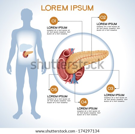 Pancreas. Modern medical infographics. Internal organs in a human body. Anatomy of people - stock vector