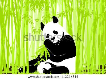 Panda bear - stock vector