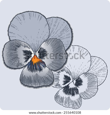 Pansy flower, hand-drawing. Vector. - stock vector