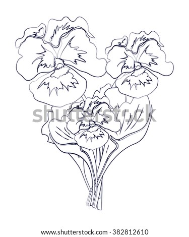 Pansy isolated on white background. Vector line art illustration