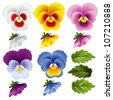 Pansy. Set of different flowers and leaves. - stock vector