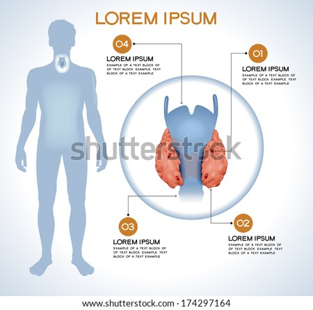 Parathryroid. Modern medical infographics. Internal organs in a human body. Anatomy of people - stock vector