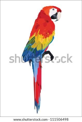 parrot - stock vector