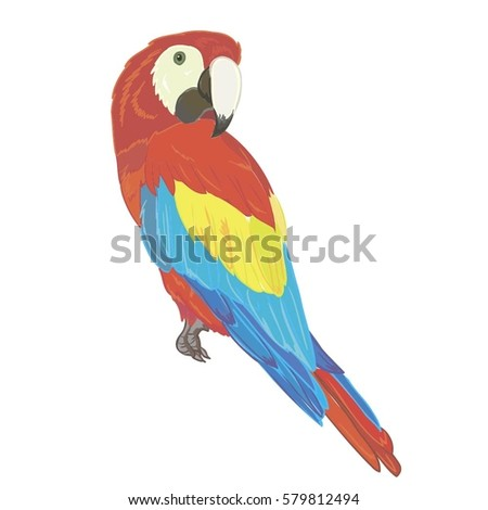 parrot bird - vector illustration