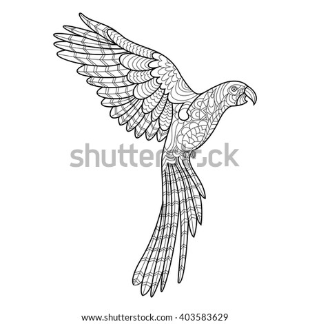 Parrot Macaw Bird Coloring Book Adults Stock Vector