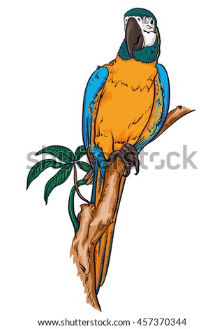 Parrot macaw on a branch, vector illustration - stock vector