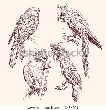 Parrot set  vector llustration - stock vector
