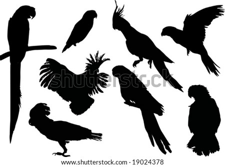 parrot silhouettes collection isolated on white background - stock vector