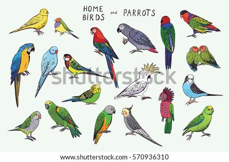 Parrots Birds Color Set Stock Photo (Photo, Vector, Illustration ...