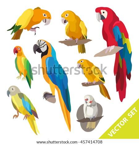 Parrots birds. Exotic birds set with parrots illustration vector. Beautiful vector design. - stock vector