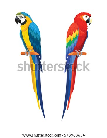 Parrots isolated on white background. Vector illustration.