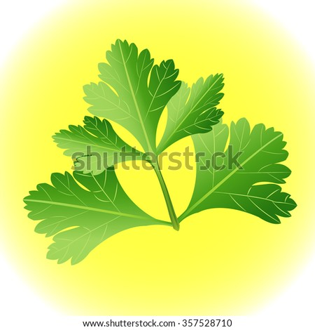 Parsley herb isolated on yellow background. Vector illustration. - stock vector