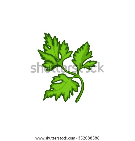 Parsley isolated on white background. Vector illustration. - stock vector