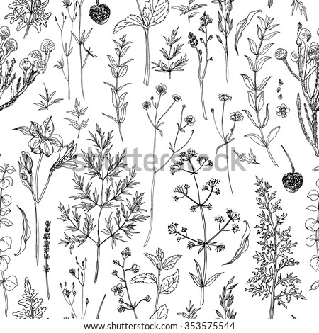 Pattern herbs and flowers painted black line. Space for text. Vector drawing.  - stock vector