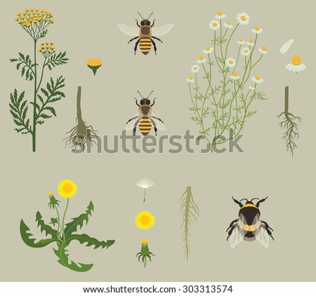 Pattern with Bees and Yellow Flowers