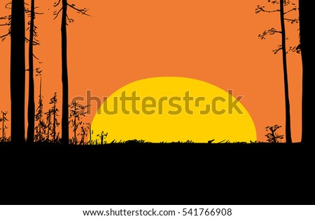 Peaceful forest wilderness scene of trees with rising sun in sky