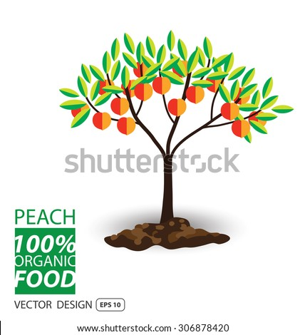 Peach, fruits vector illustration. - stock vector
