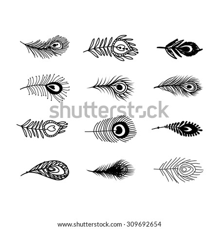 Peacock feather set for your design. Vector illustration - stock vector