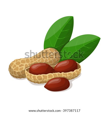 Peanuts with leafs isolated on white. Vector illustration.